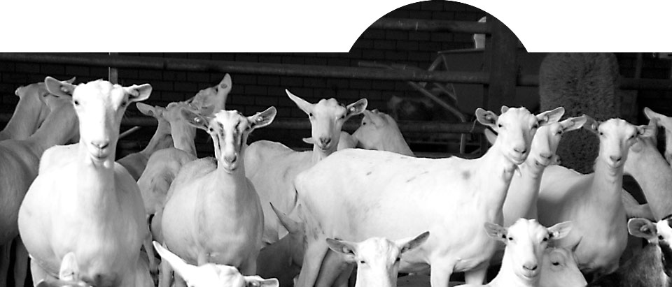 Goat Research Centre